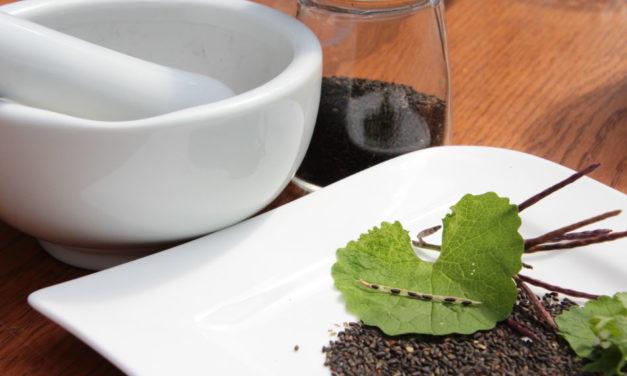 Knoblauchsrauke Samen für die Pfeffermühle