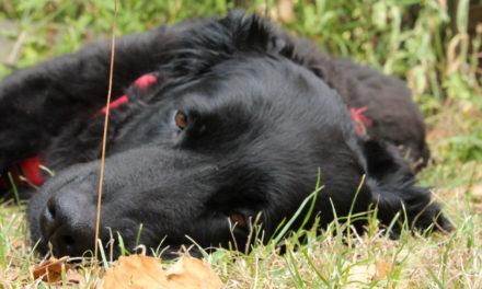 Frühjahrskur für den Hund – Lebensgeister wecken