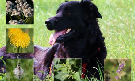 Kräuter für den Hund – Infos kompakt