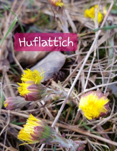 Huflattich