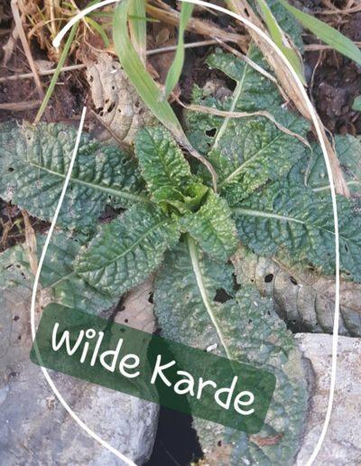 Wilde Karde